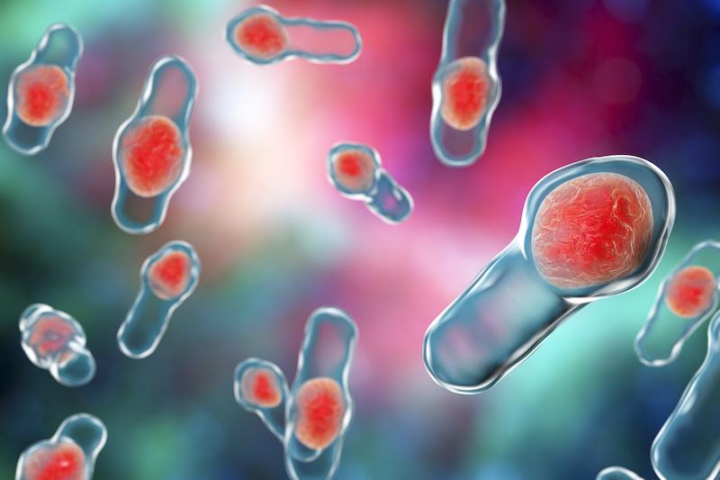 clostridium difficile bacteria is often a reason IBD patients are prescribed an antibiotic